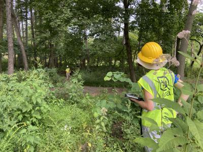 2020 Tree Census field crew taking measurements