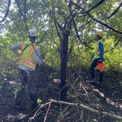 2020 Tree Census field crew taking measurements in plot 3087