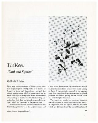 The Rose: Plant and Symbol