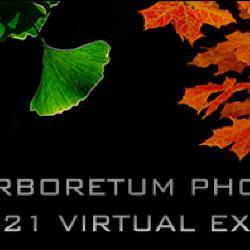 MAPS 2021 Virtual Exhibit Banner