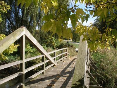 Wooden Bridge in Fall
