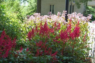 Perennial Combinations, dark and light pinks