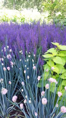 Perennial Combinations, purple, pink, green