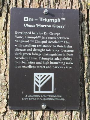 Triumph Elm Sign