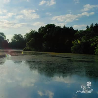 Aerial Footage over Lake Marmo