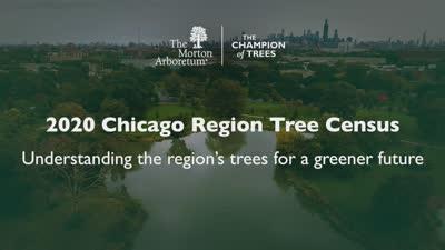 Chicago Region Tree Census Promotional Video