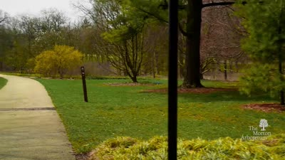 Virtual Walk of Joy Path