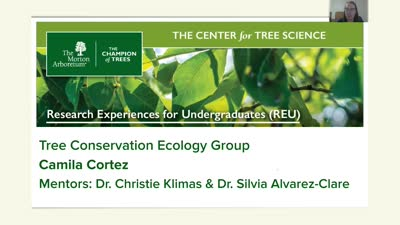 Demography of an Endangered Oak