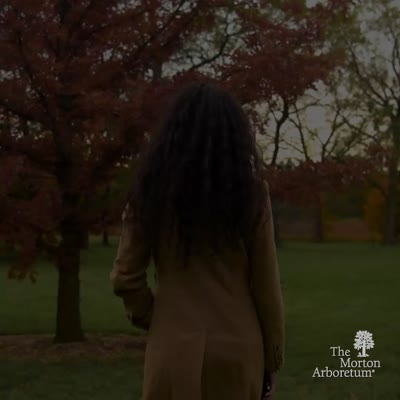 Fall Color at The Morton Arboretum, Promotional Video