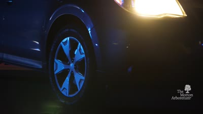 Illumination: Tree Lights at The Morton Arboretum, Promotional Video