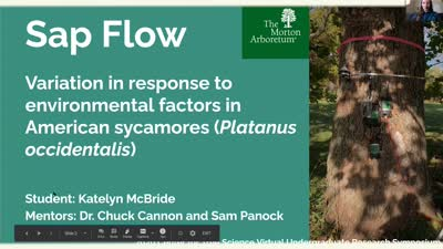 Sap flow variation in response to environmental factors in American sycamores