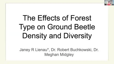 The Effects of Forest Type on Ground Beetle Abundance and Diversity