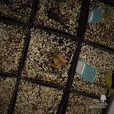 Oak Seedlings Time-lapse Video