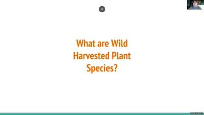 U.S Wild Harvested Tree Species: A Conservation Snapshot