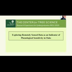 Exploring Remotely Sensed Data as an Indicator of Phenological Sensitivity in Oaks
