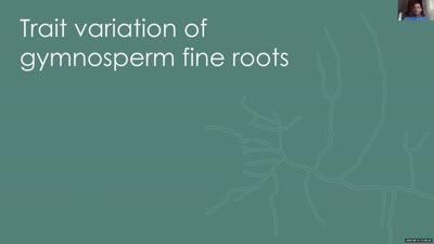 Trait variation of gymnosperm fine roots