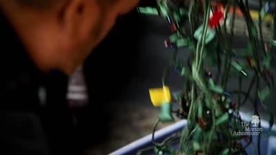 Evergreen: The Virtual Gala for The Morton Arboretum, John Featherstone Promotional Video