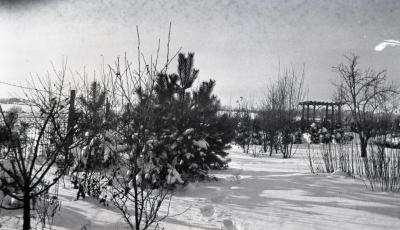 Yard at Clarence Godshalk's first Arboretum house in winter, pergola in the distance