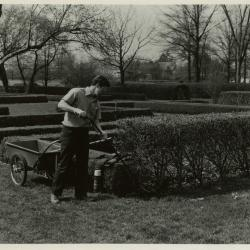John Masengarb working in the Hedge Garden