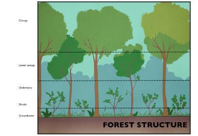 Forest Structure Illustration