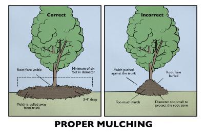 Proper Mulching Illustration
