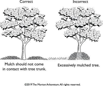 Tree Care: Mulch Illustration