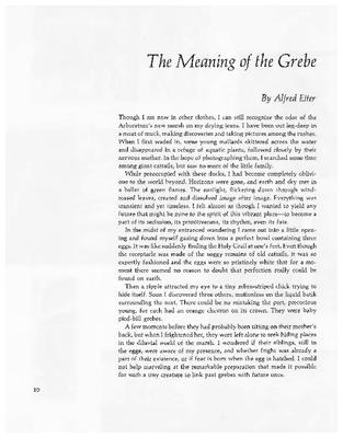 The Meaning of the Grebe