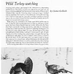 Wild Turkey-watching