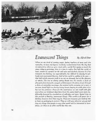 Evanescent Things