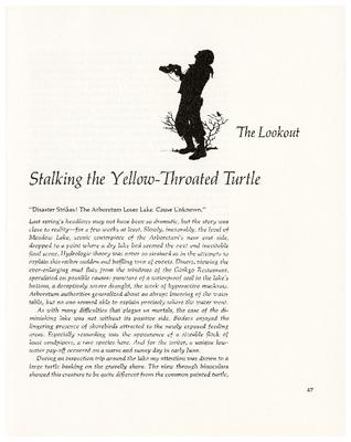 The Lookout: Stalking the Yellow-Throated Turtle