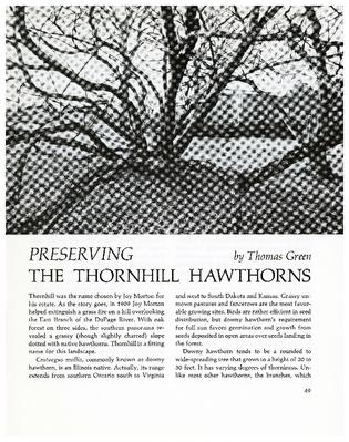 Preserving the Thornhill Hawthorns