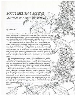 Bottlebrush Buckeye: Mysteries of a Southern Delight