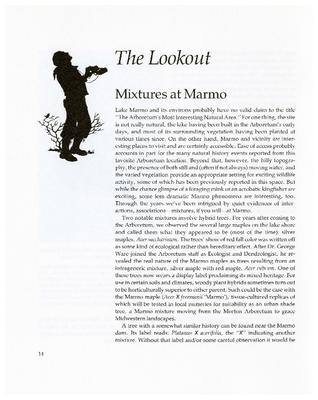 The Lookout: Mixtures at Marmo