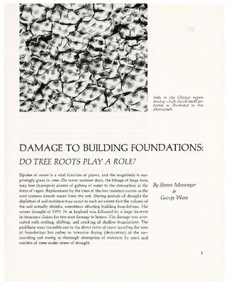 Damage to Building Foundations: Do Tree Roots Play a Role?
