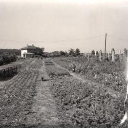 Propagation beds and nursery looking north from South Farm, Teuscher residence in distance