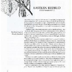 Eastern Redbud (Cercis Canadensis L.)
