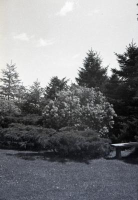 Clarence Godshalk's second Arboretum house landscape with stone bench