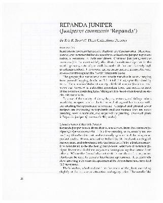 Repanda Juniper (Juniperus communis 'Repanda')