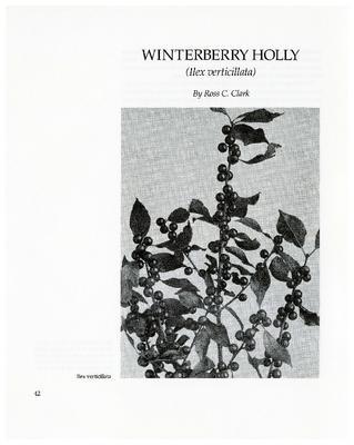 Winterberry Holly (Ilex verticillata)