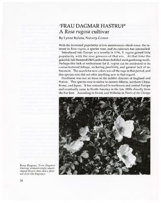'Frau Dagmar Hastrup': A Rosa rugosa cultivar