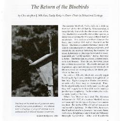 The Return of the Bluebirds