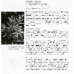 Sweet-Fern (Comptonia peregrina)