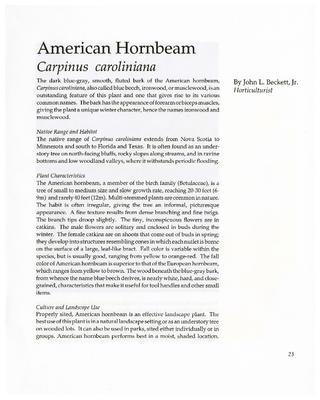 American Hornbeam, Carpinus caroliniana