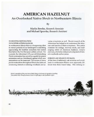 American Hazelnut: An Overlooked Native Shrub in Northeastern Illinois