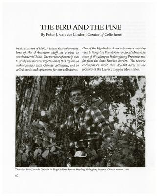 The Bird and the Pine