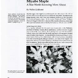 Miyabe Maple: A Tree Worth Knowing More About