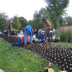 Grounds crew planting bulbs at The Morton Arboretum