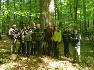 Oak research in France