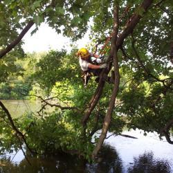 Beau Nagan climbing a tree branch
