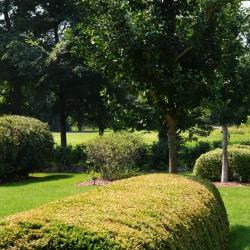 Hedge Garden at The Morton Arboretum